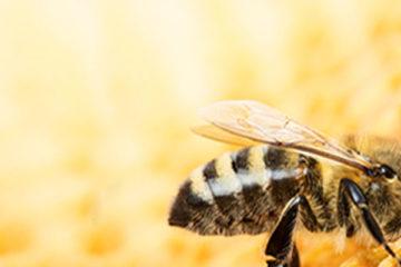 alimento para abejas